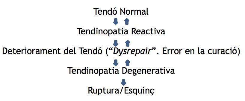Article fisio_Lesions de tendó_02